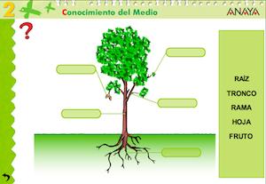 Un planeta lleno de vida educacion 2 0 for Todas las plantas ornamentales