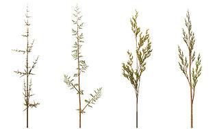 320px-fractal_weeds