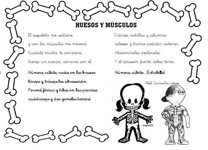 naturales – huesos y músculos – canción 1 | rossmar