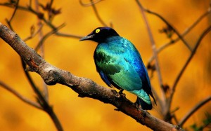 uccellini_albero_1440x900
