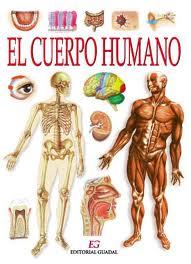 Explora el cuerpo humano en 3D | Área de Tecnología Educativa