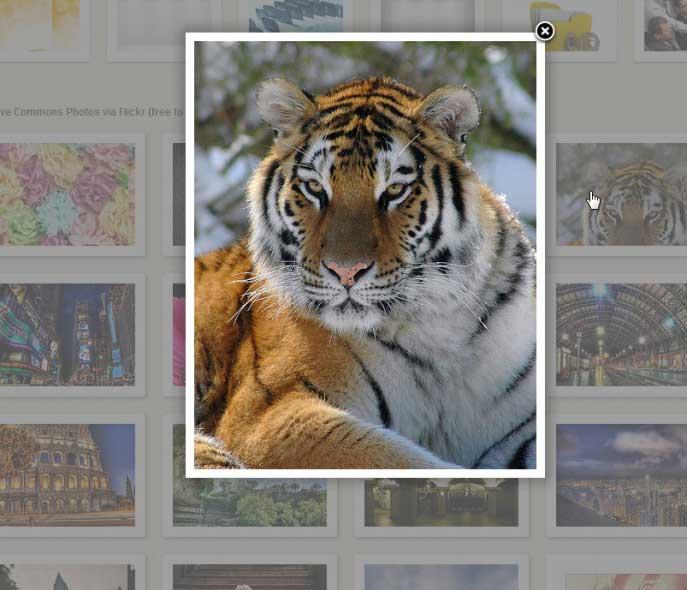 Imagen del tigre: ucumari via photopin cc