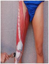 """Una Propuesta Interdisciplinar: """"Para Eliminar Tabús Corporales y Aprender Anatomía"""""""