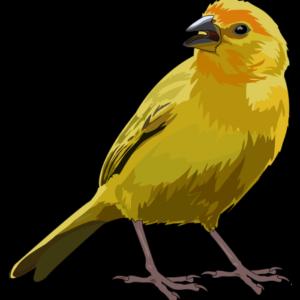 Fauna canaria