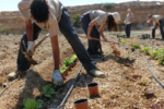 """El Proyecto """"La Taró"""" del IES Arico: el agua en el sur de Tenerife"""