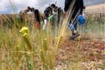 Experiencias educativas del proyecto piloto del cultivo del cereal de La Aldea
