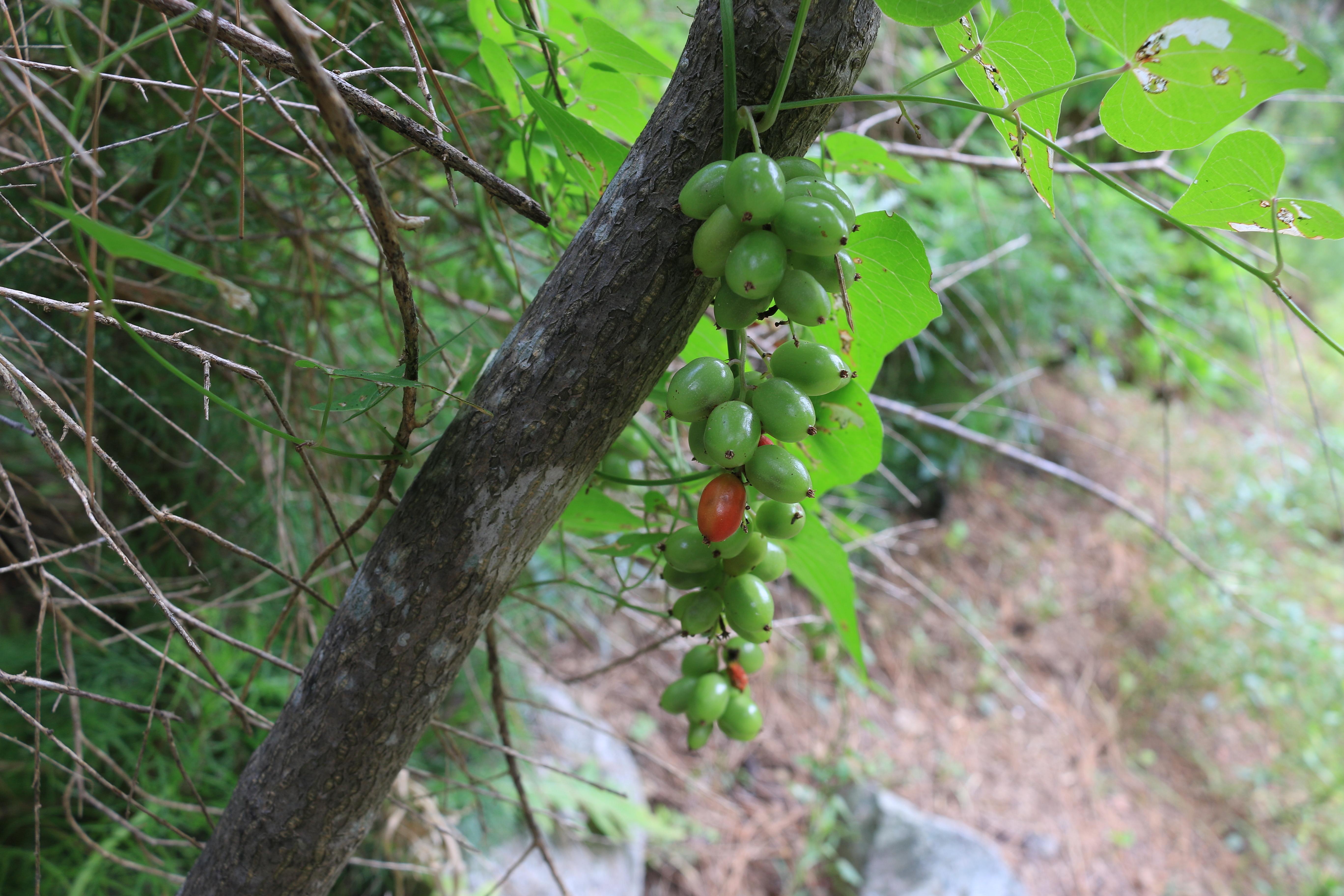 178-frutos-a-10.jpg