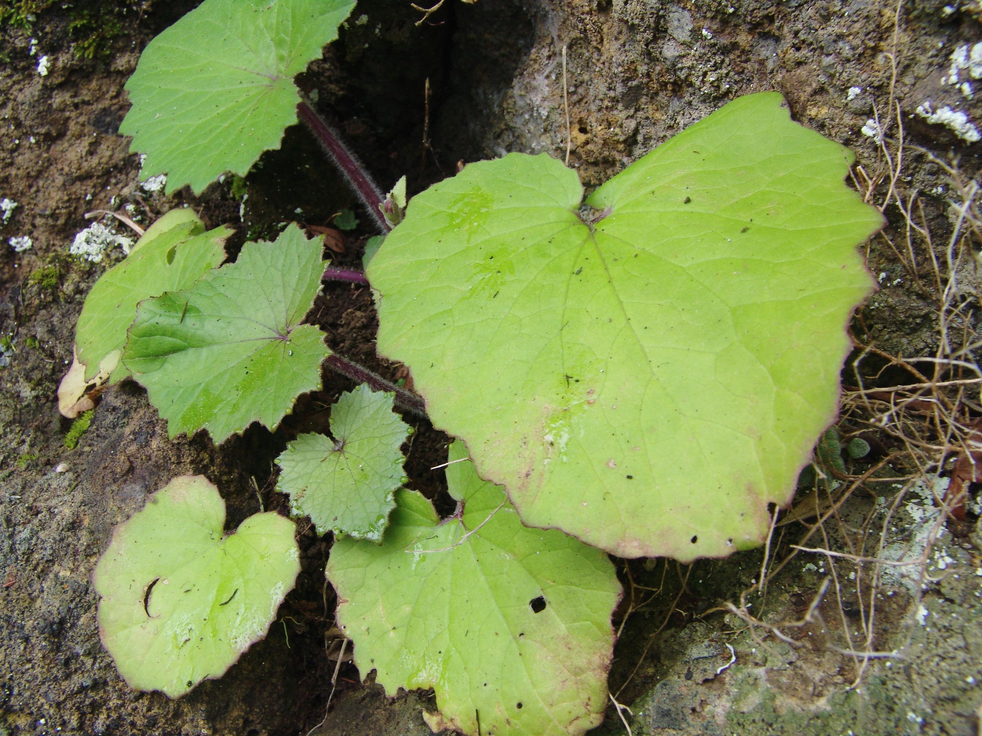 bailaderoroque-enmedio-135-hojas-a-10.jpg