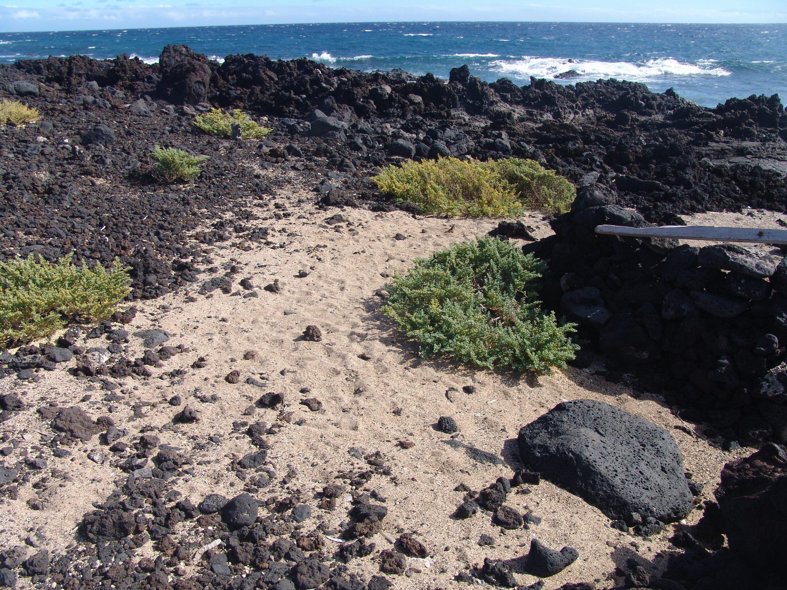 dsc04419-habitat-malpais-de-guimar-2-scaled.jpg