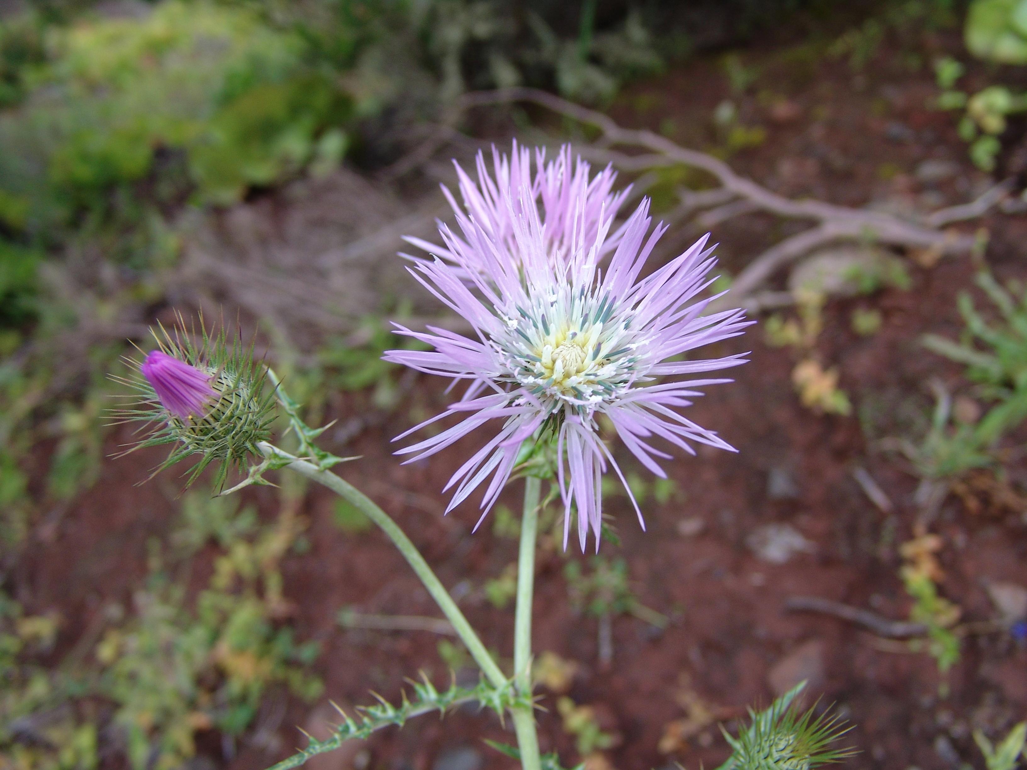 dsc07696-flor-a-10.jpg