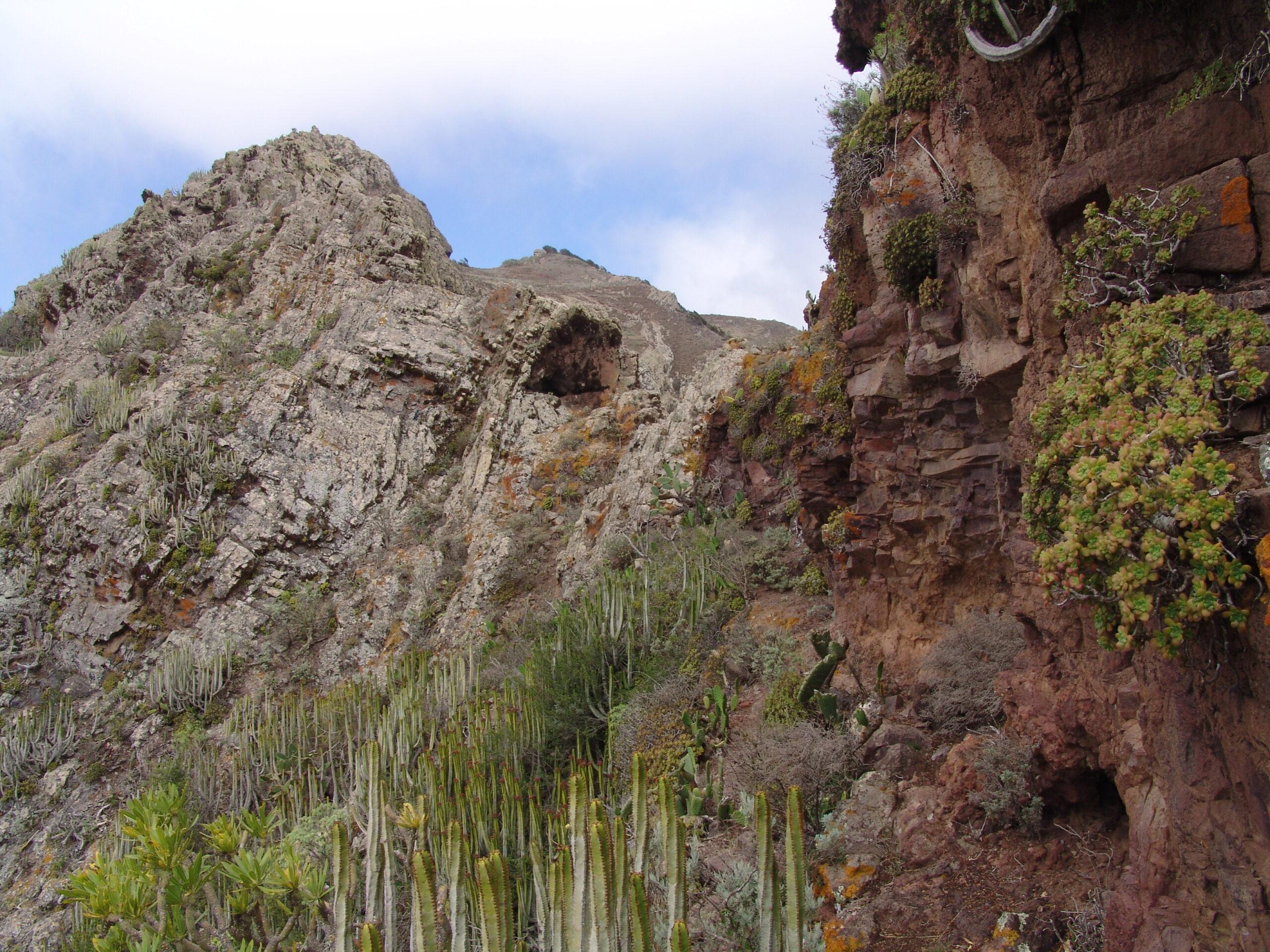 dsc09061-habitat-sabinar-punta-anaga-scaled.jpg