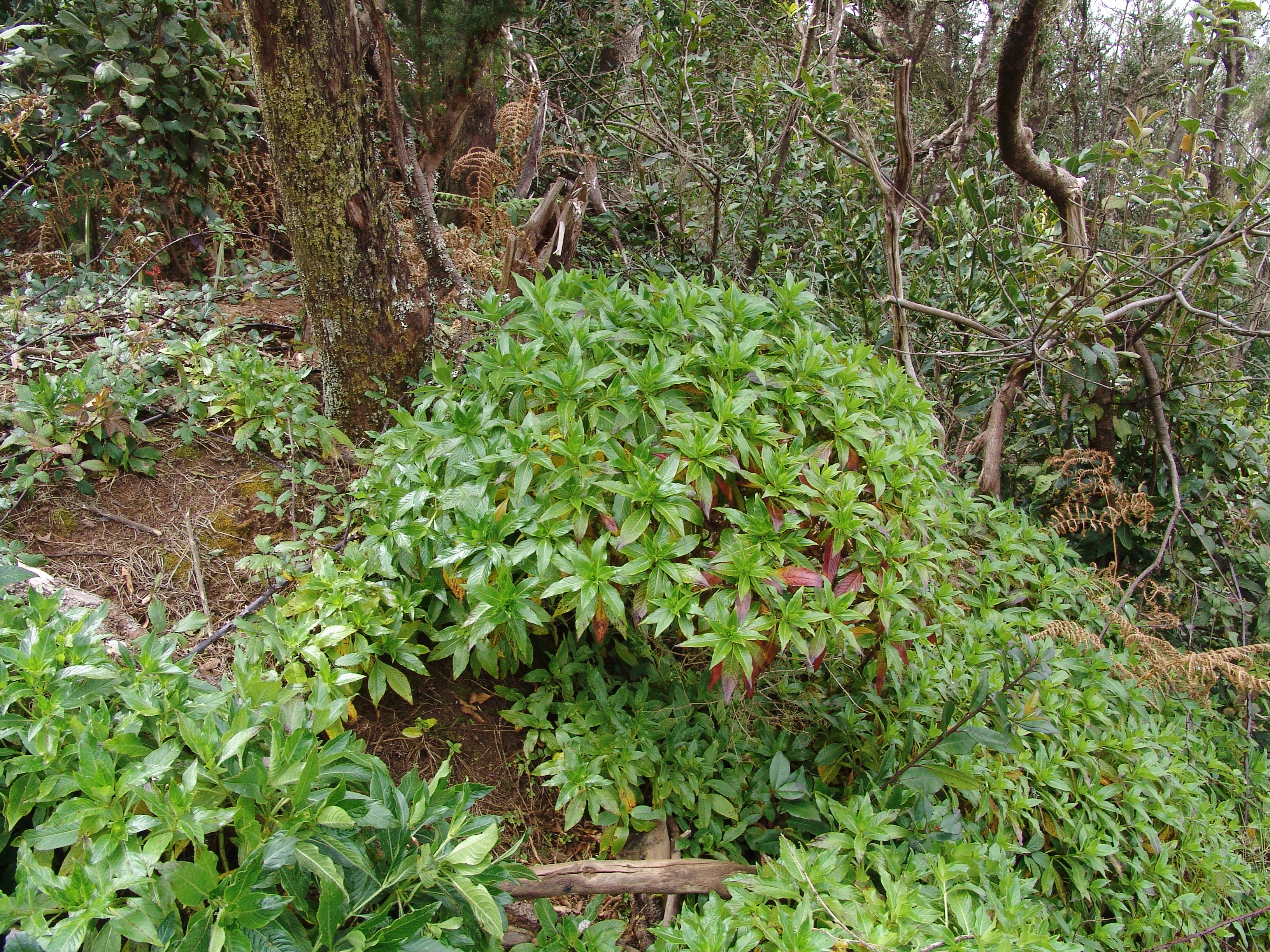 dsc09267-habitat-2-a-10.jpg