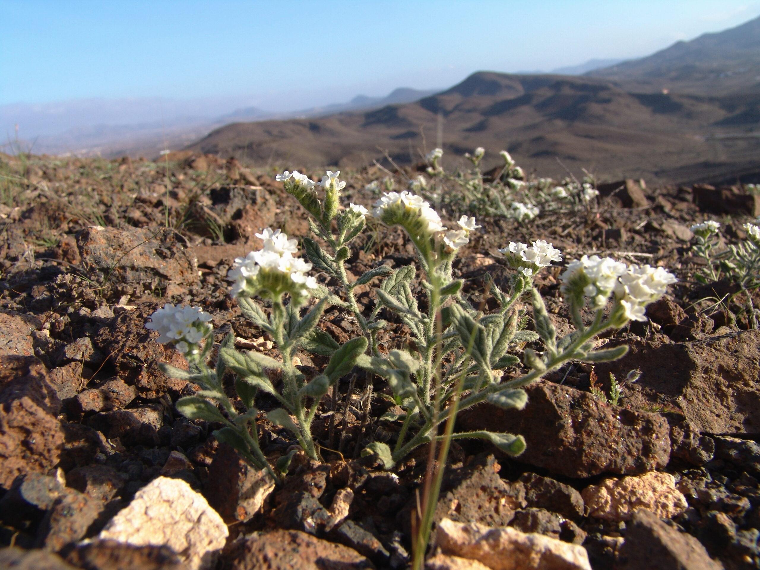 fuerteventura-07-100-camellera-habitat-scaled.jpg