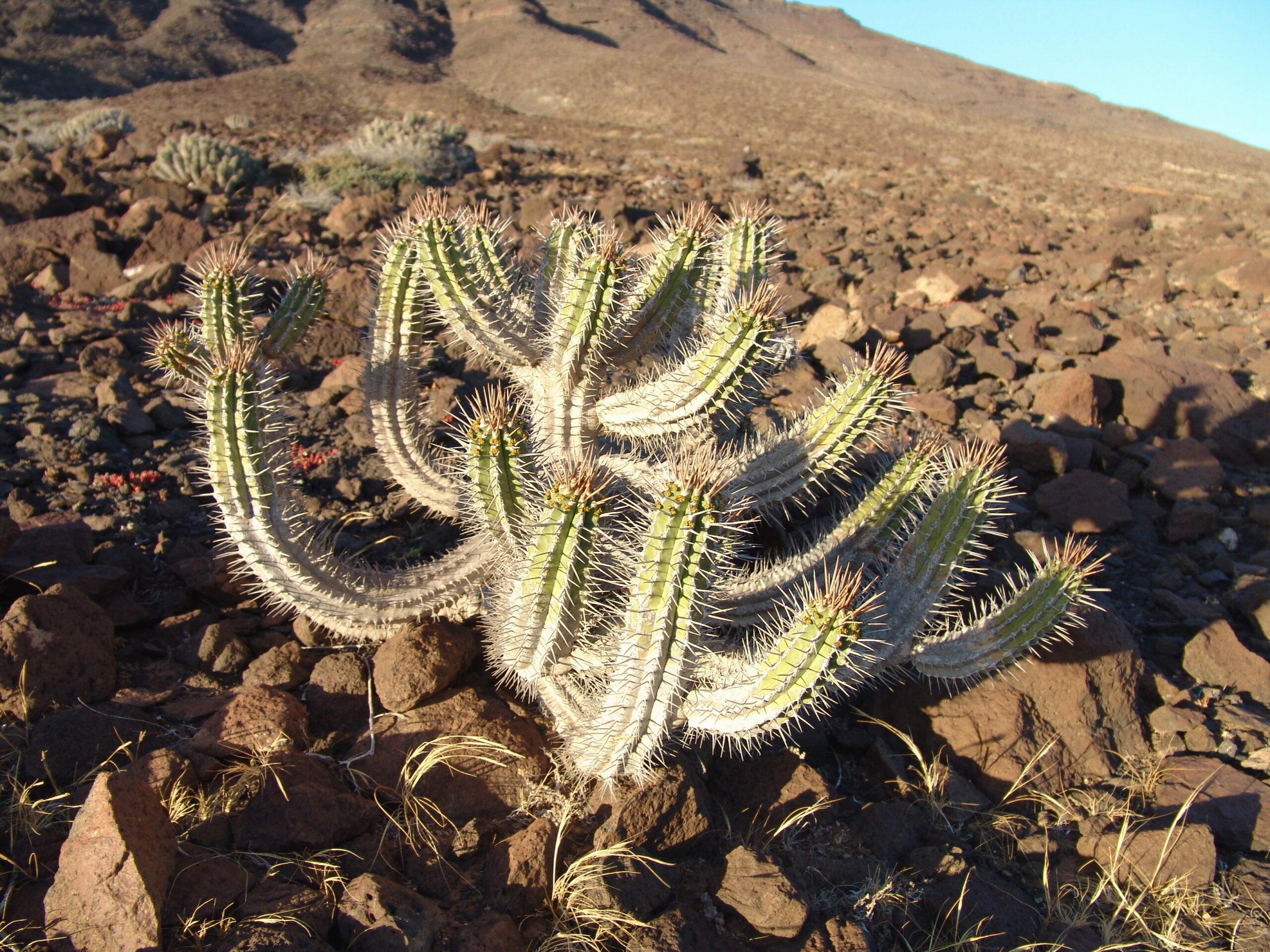 fuerteventurajunio2006-143-descripcion-2-scaled.jpg