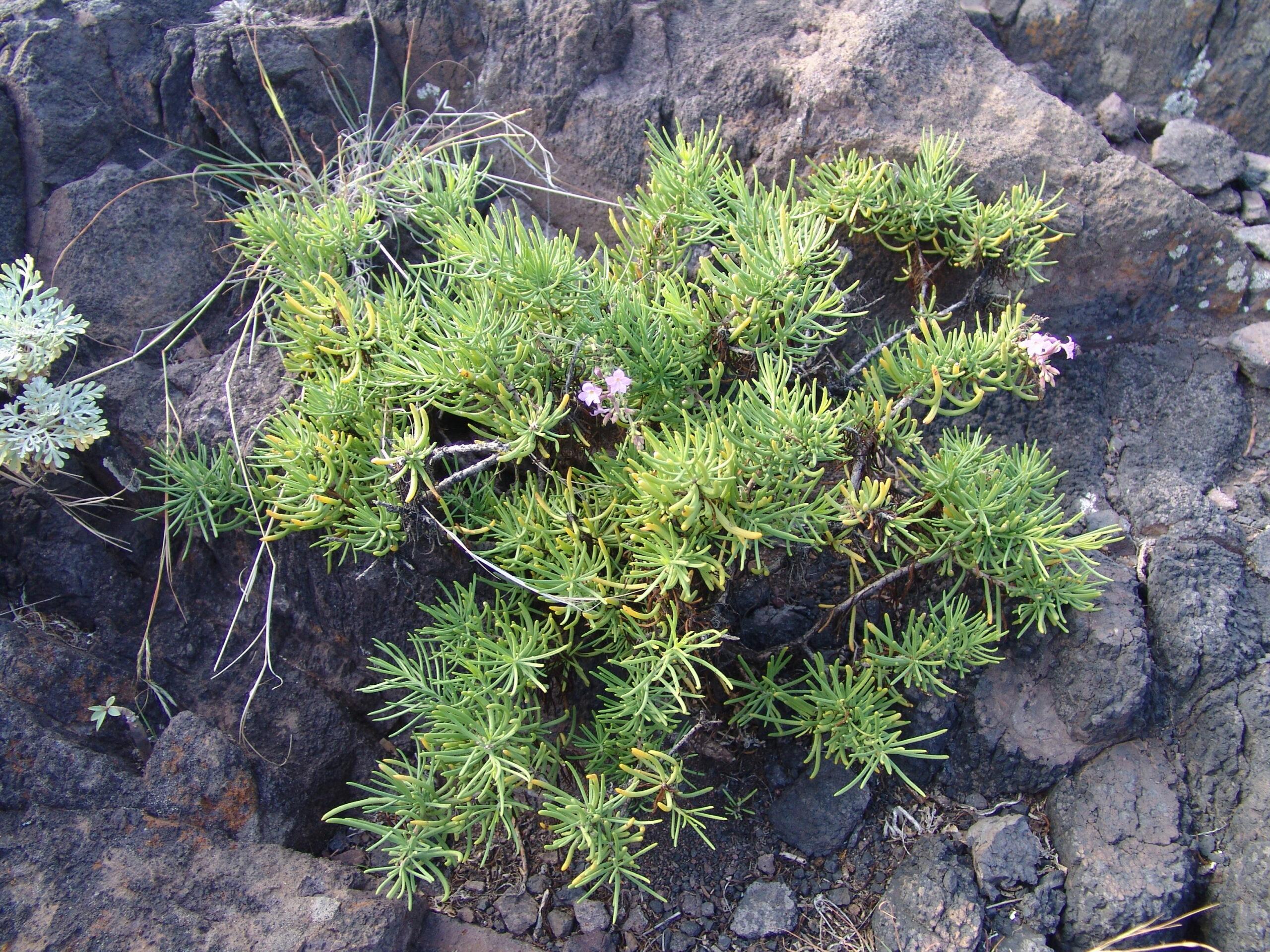 ijuanaanaga1-087-hojas-2-scaled.jpg
