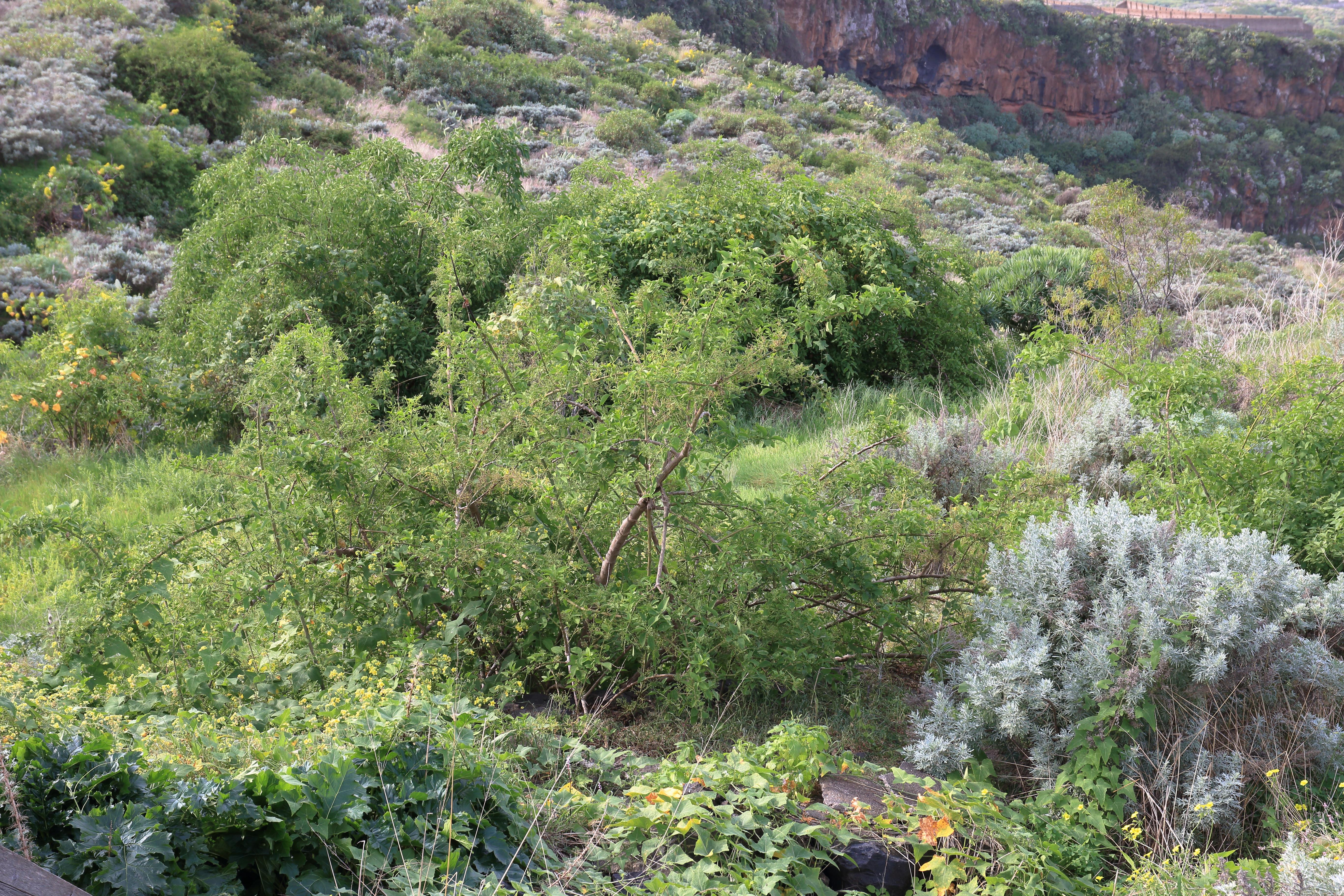 img_0166-bosea-yervamora-habitat-a-10.jpg