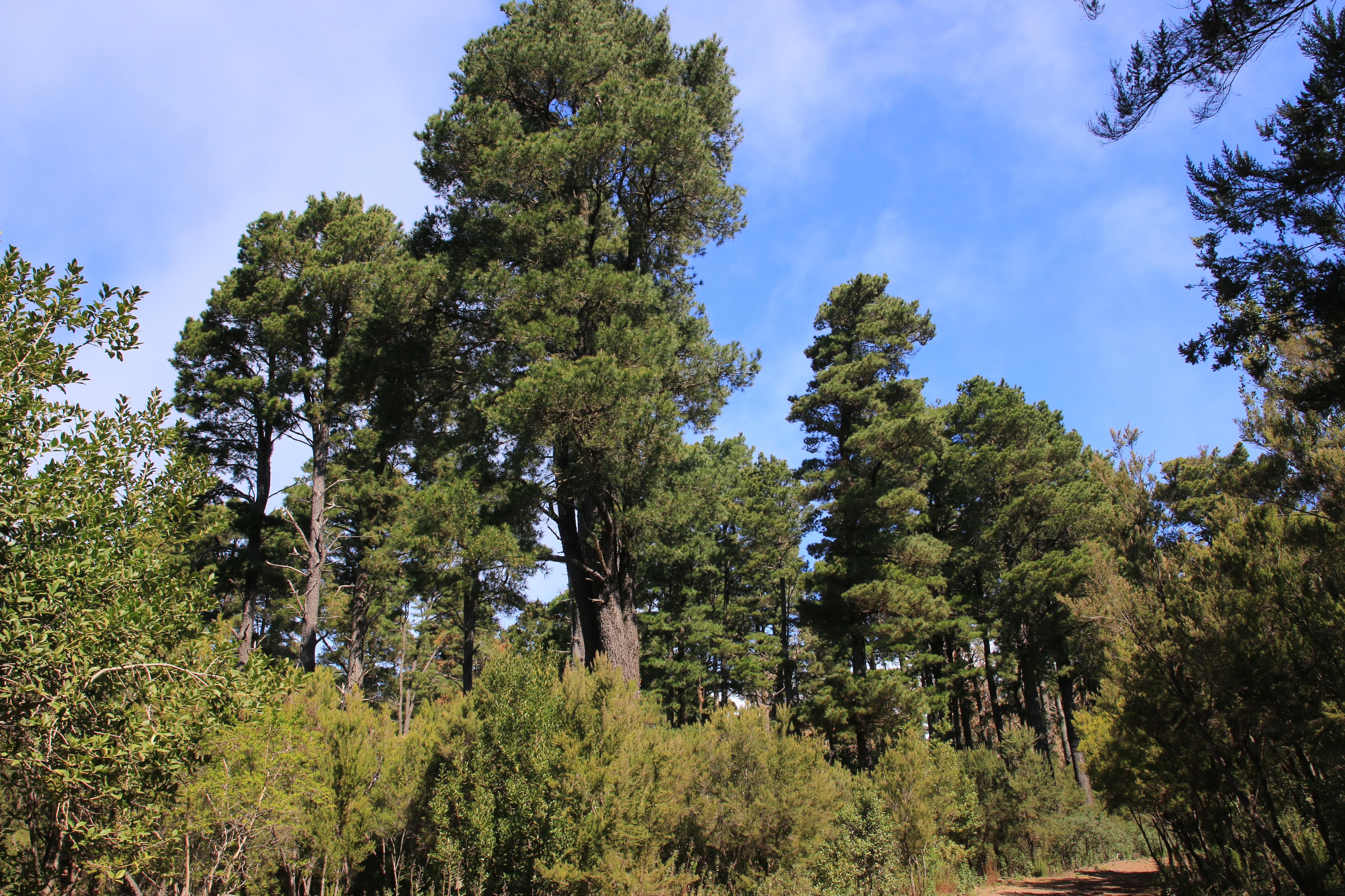 img_4115-habitat.jpg
