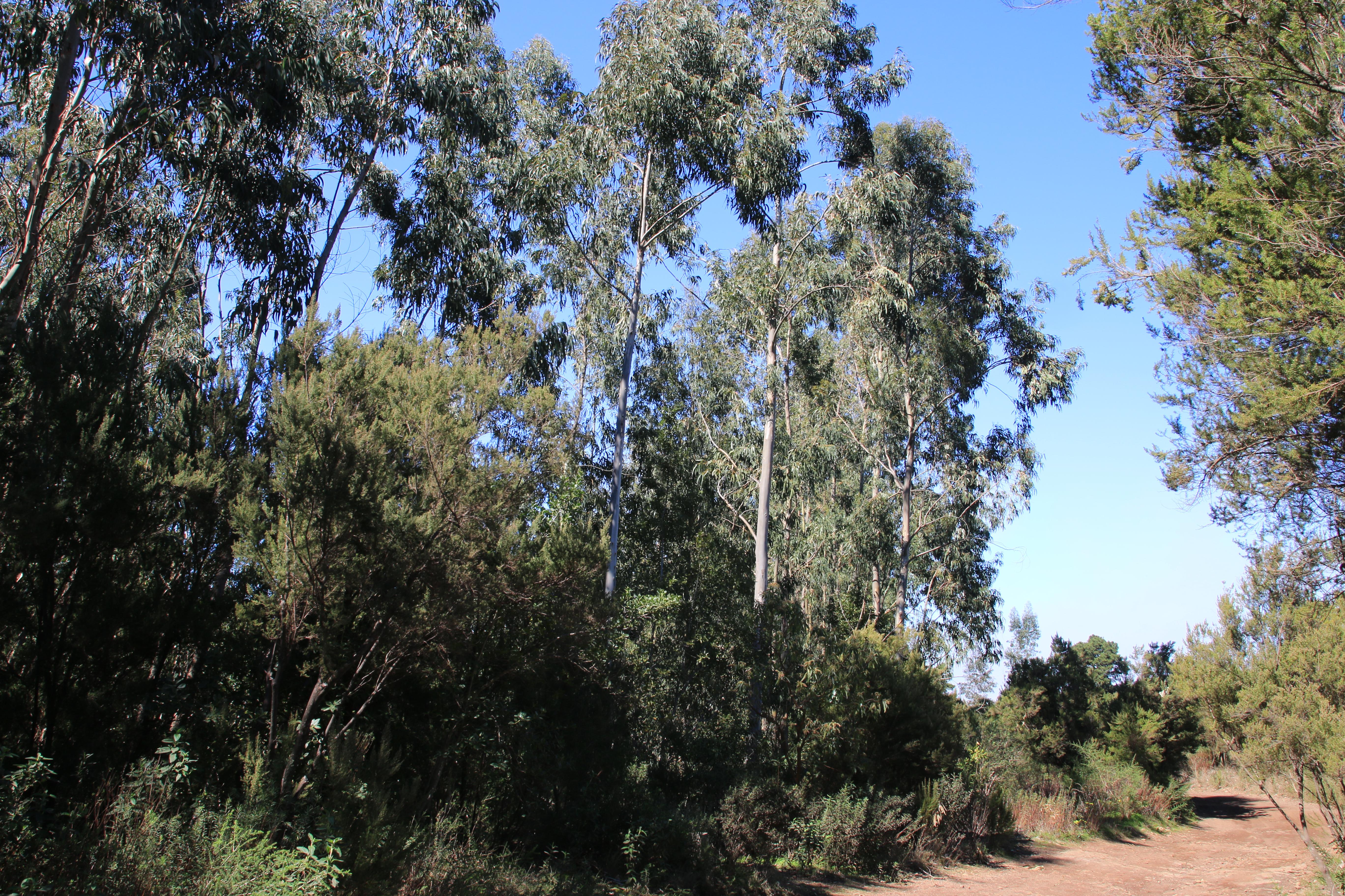 img_4120-habitat.jpg