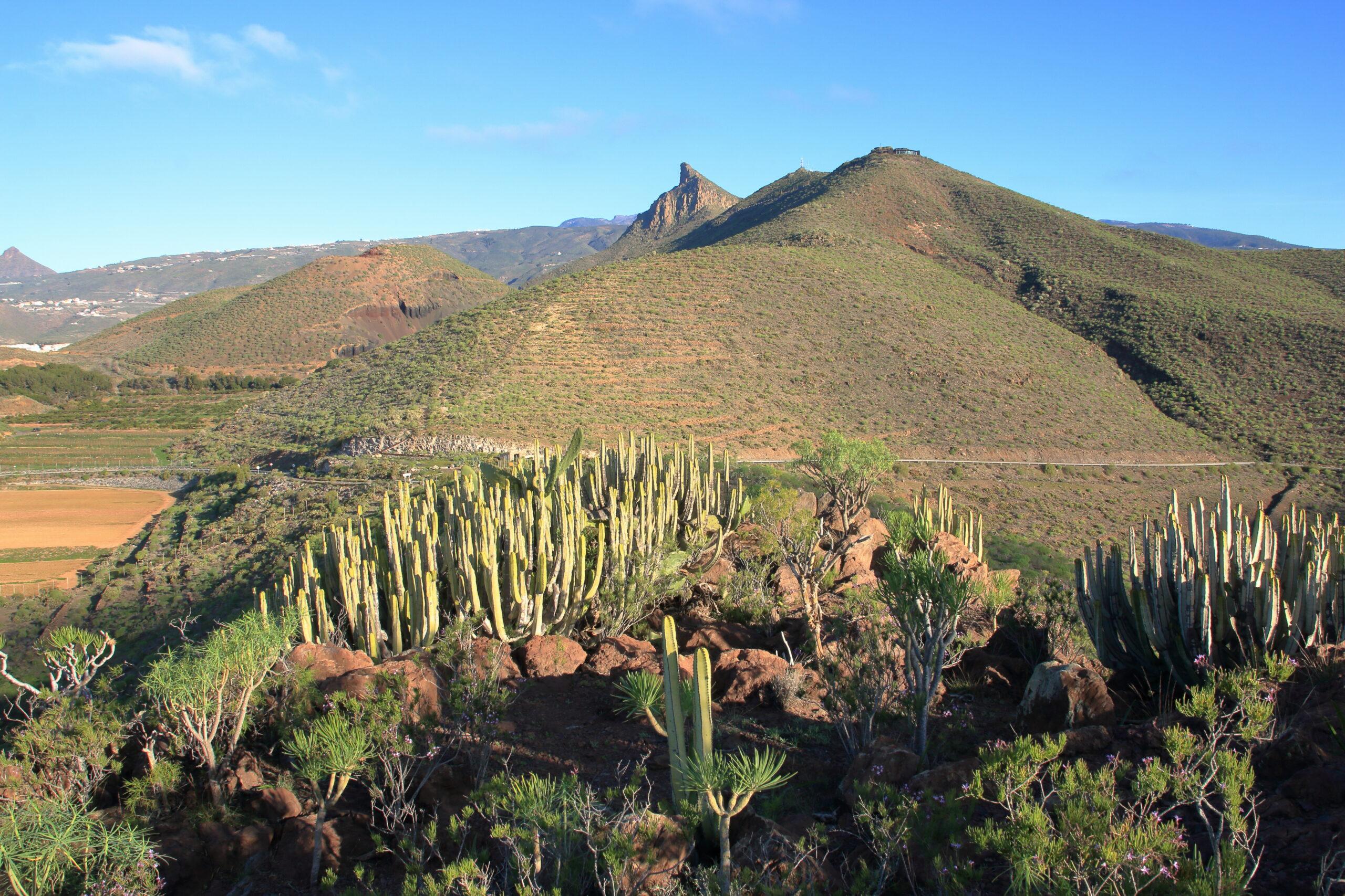 img_4385-habitat-mesas-de-la-aldea-mna-de-la-tabaibas-lomo-empinado-2-scaled.jpg