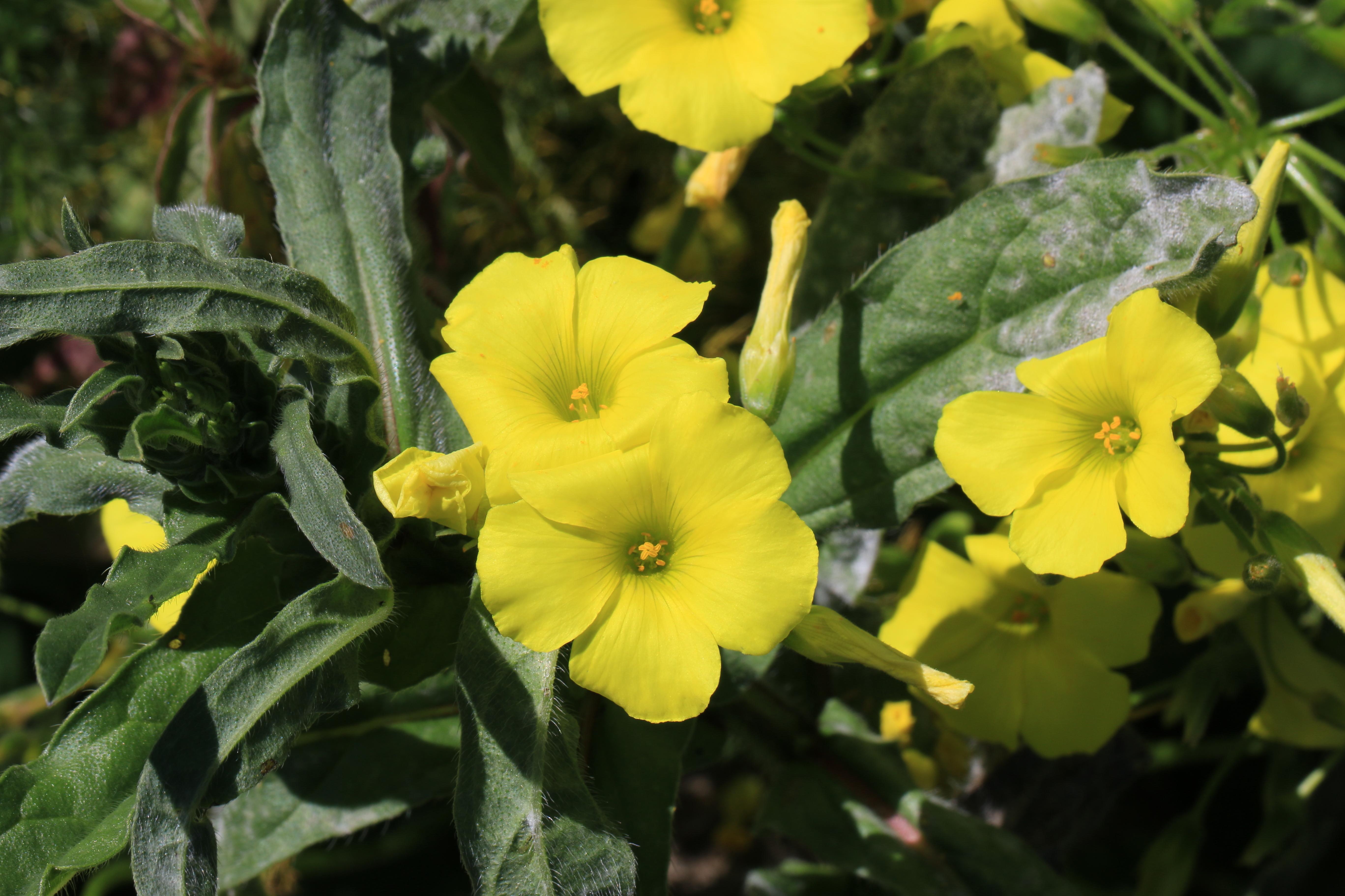 img_5413-flores-a-10.jpg
