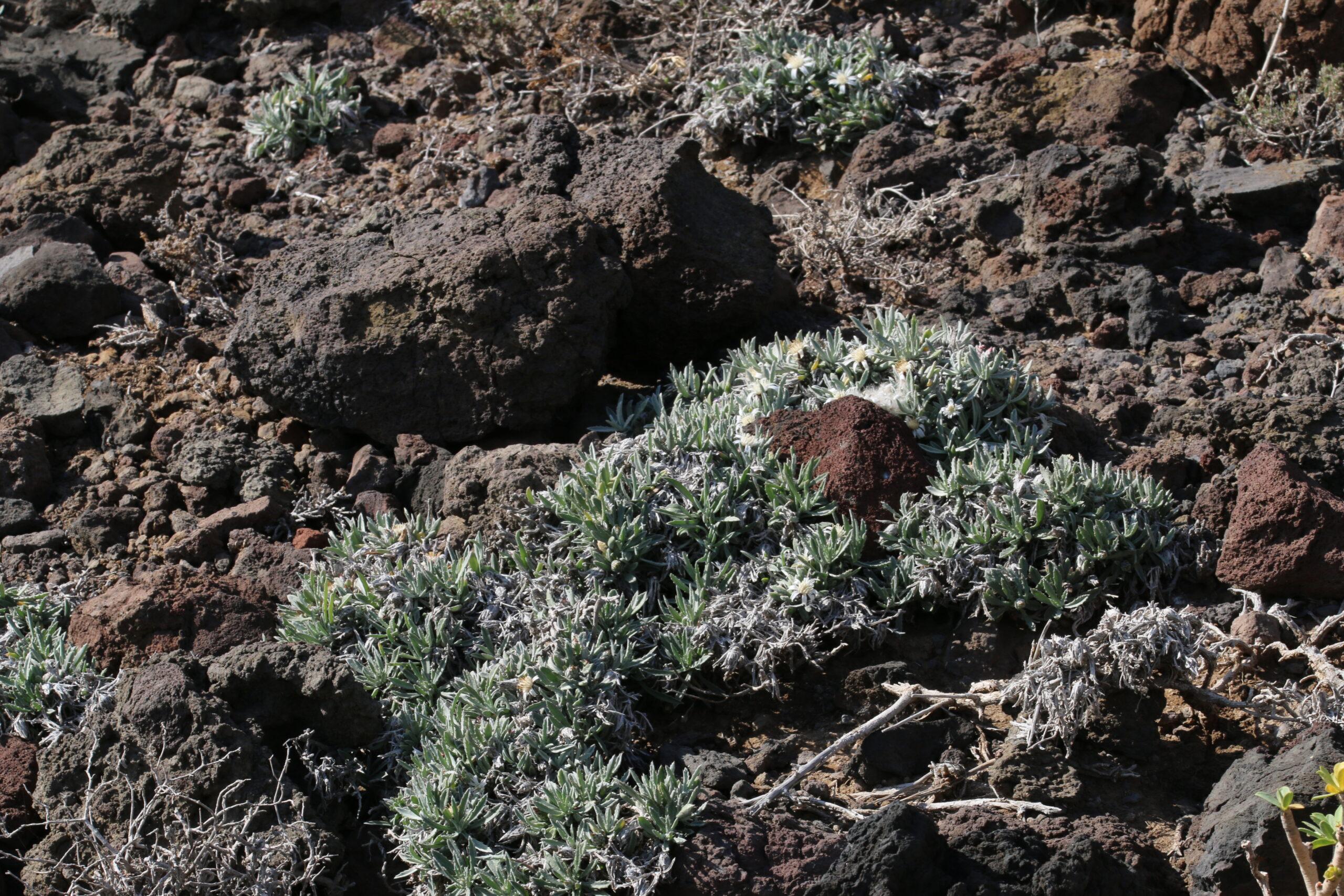 img_5857-habitat-scaled.jpg