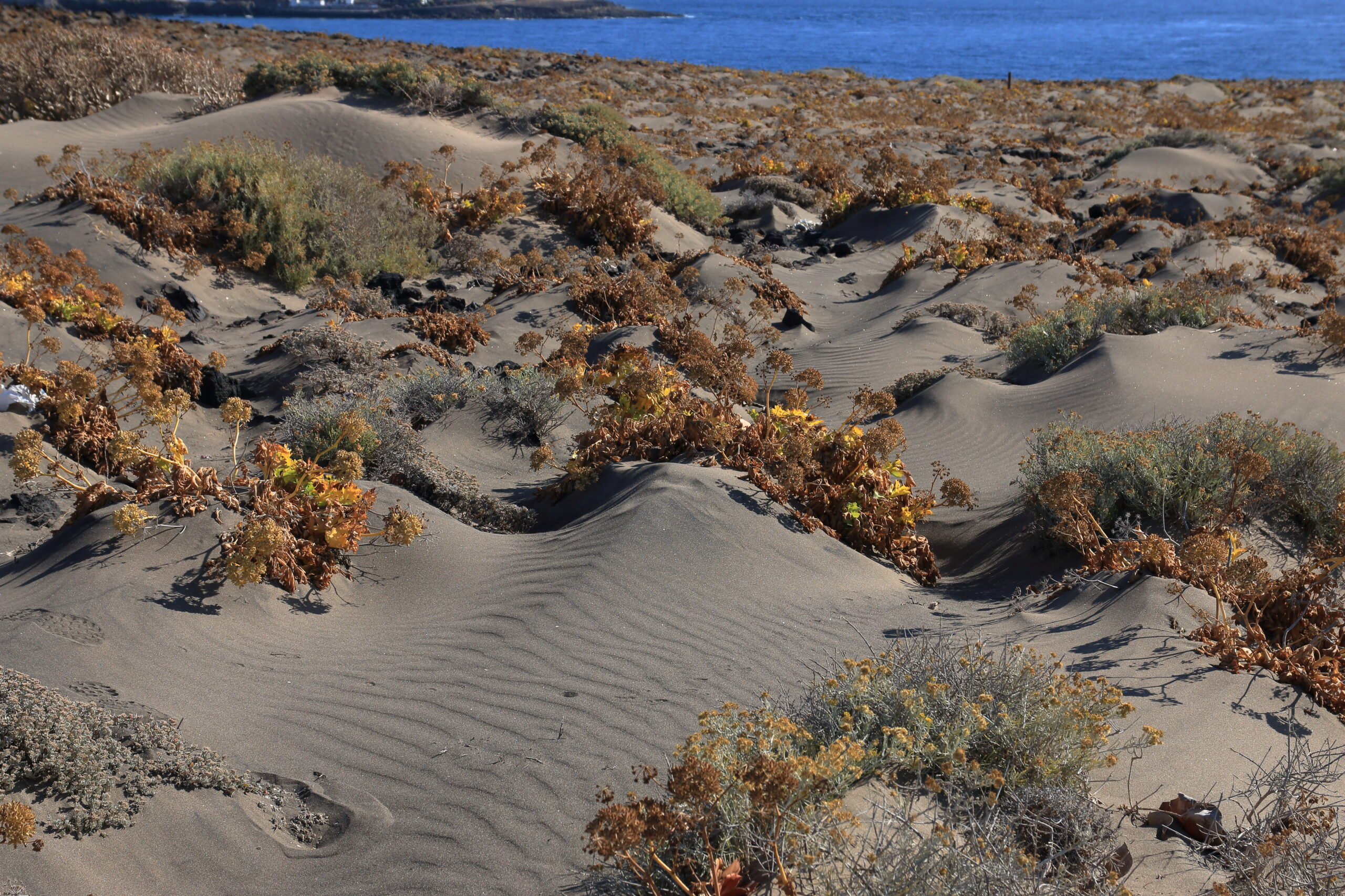 img_7061-dunas-arena-con-vegetacion-halofila-2-scaled.jpg