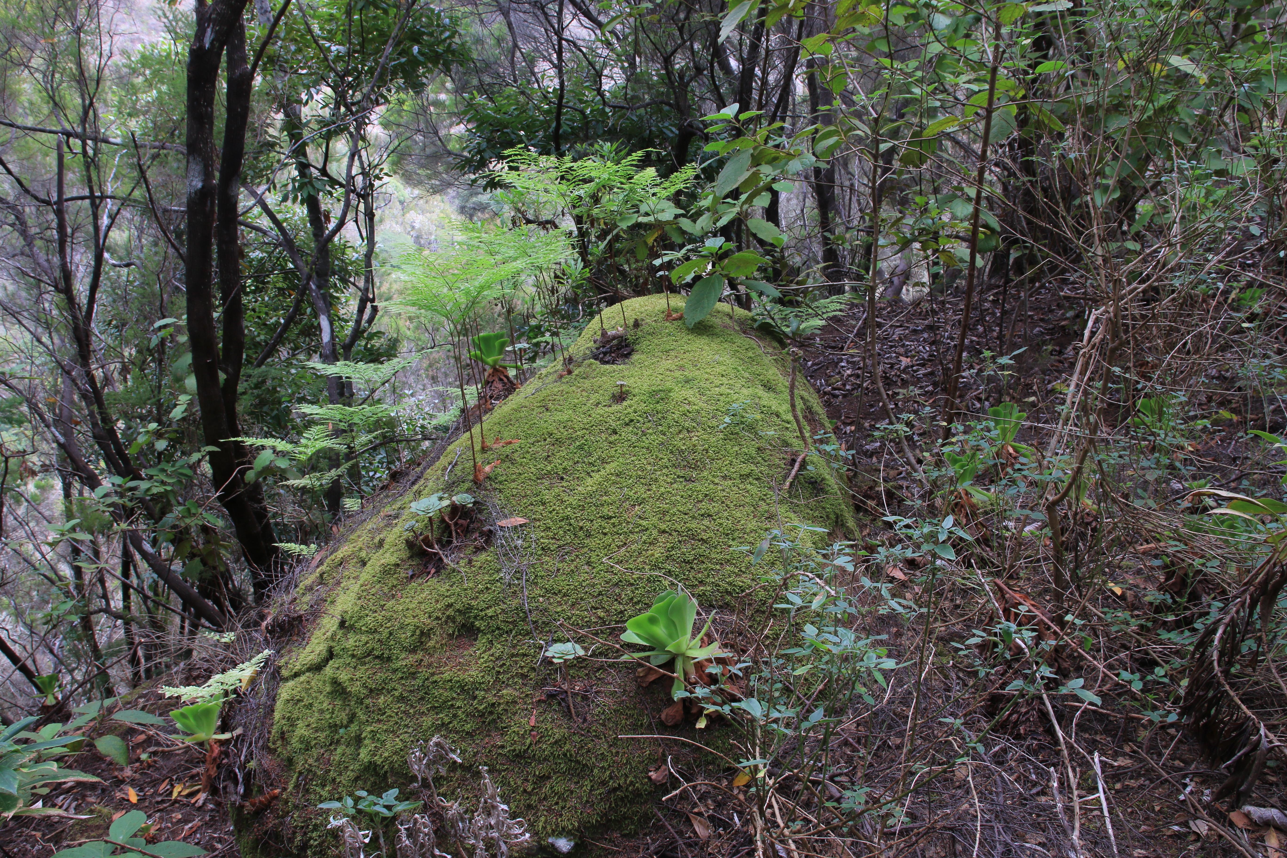 img_7508-davallia-a-10-habitat-1.jpg