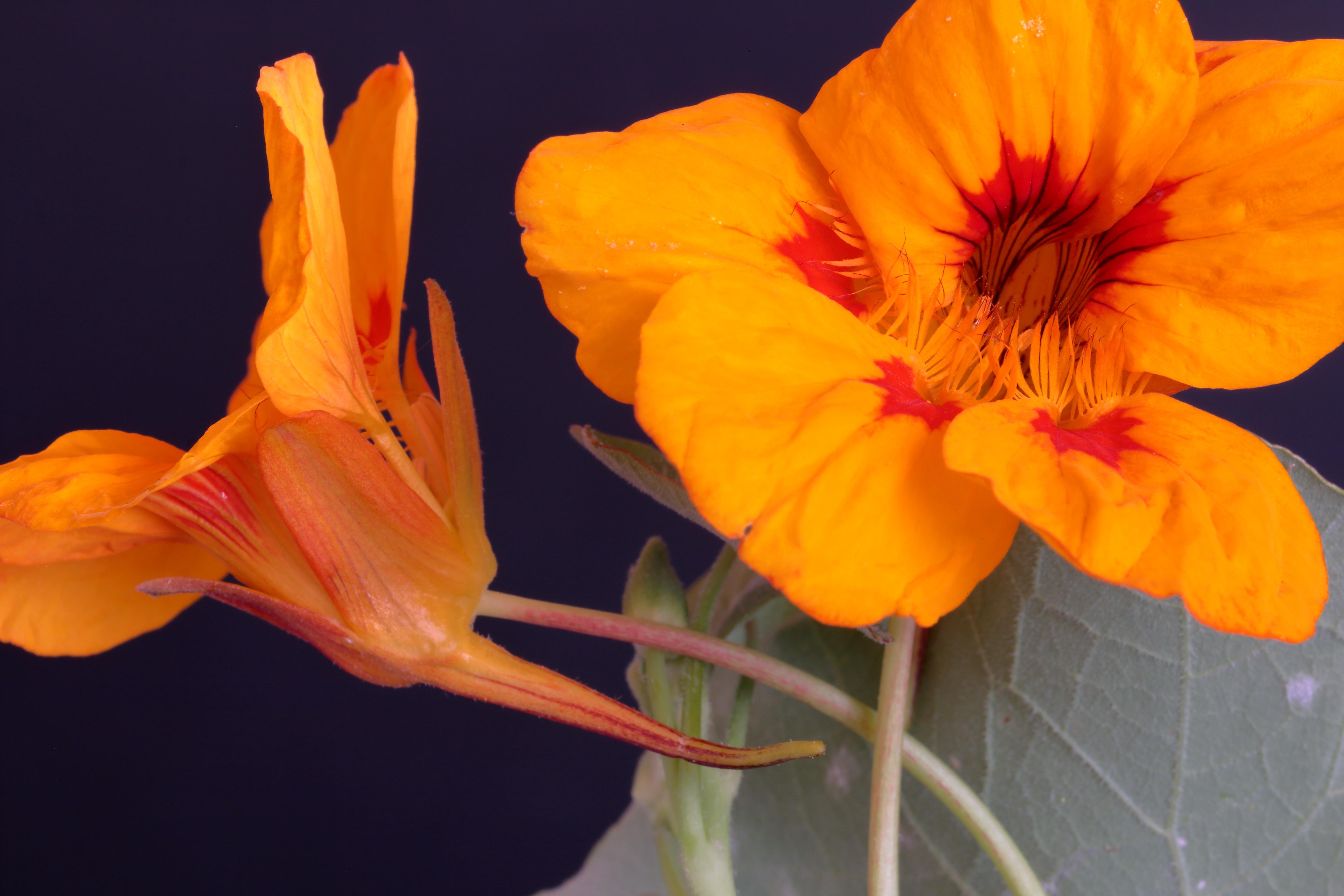 img_7723-flor-a-10-mejor.jpg