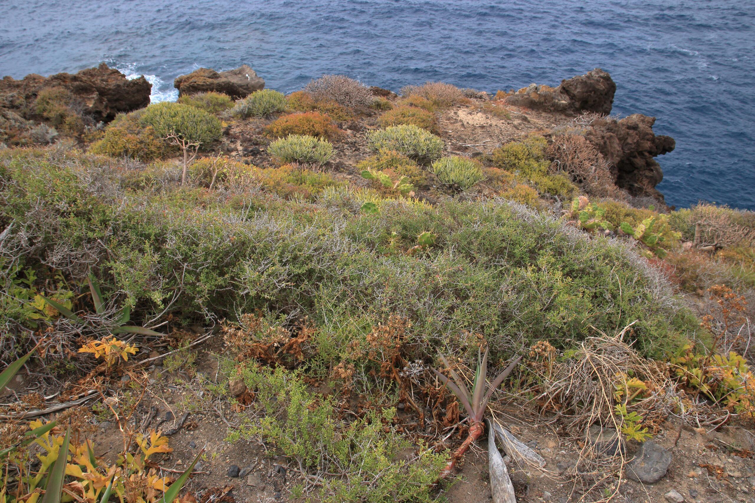 img_8579-habitat-toldas-salsolas-lechugas-de-mar-vegetacion-halofila-scaled.jpg