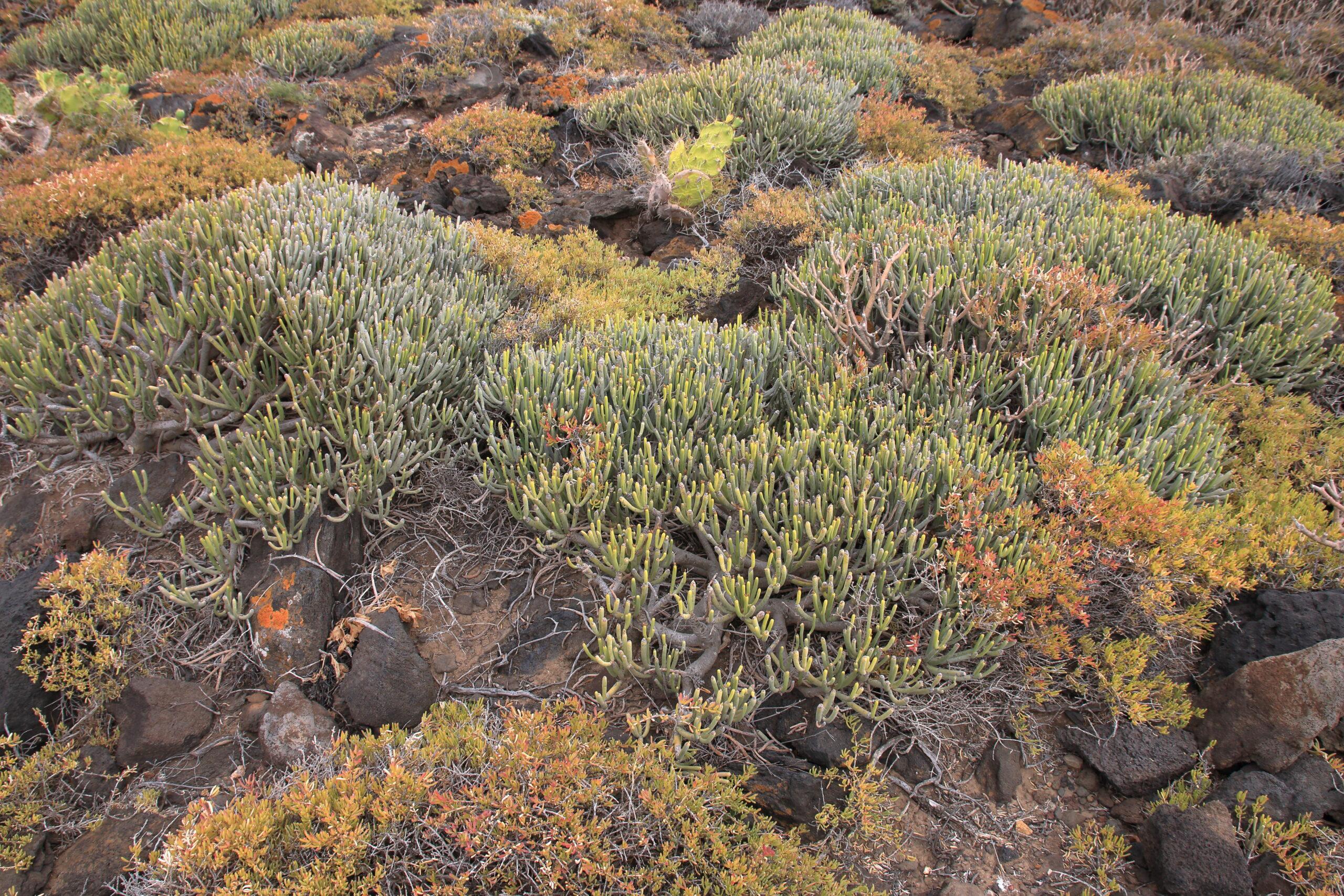img_8626-habitat-tolda-matabrusca-negra-y-tunera-india-scaled.jpg