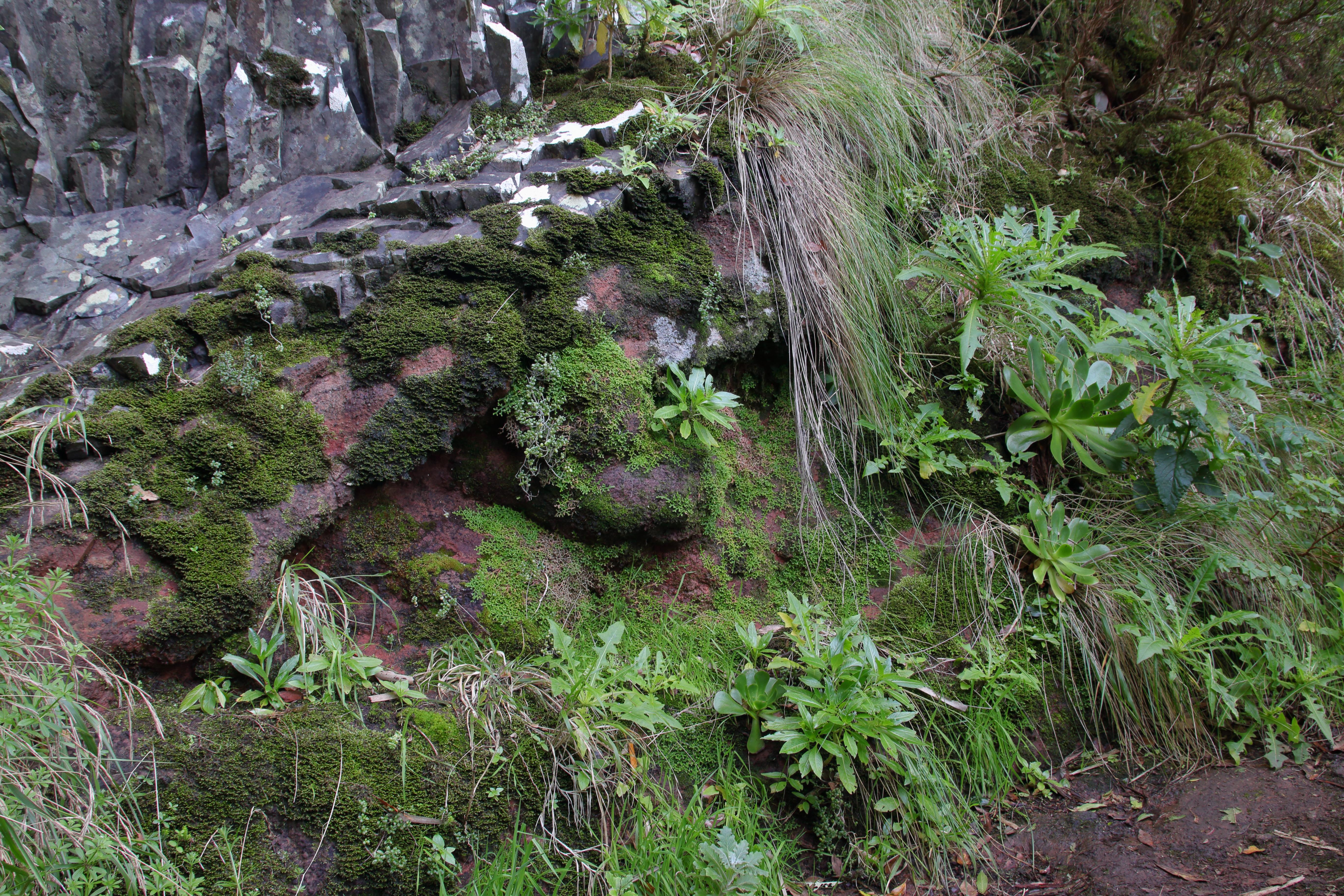 img_9939-habitat-selaginella-y-otras-a-10.jpg