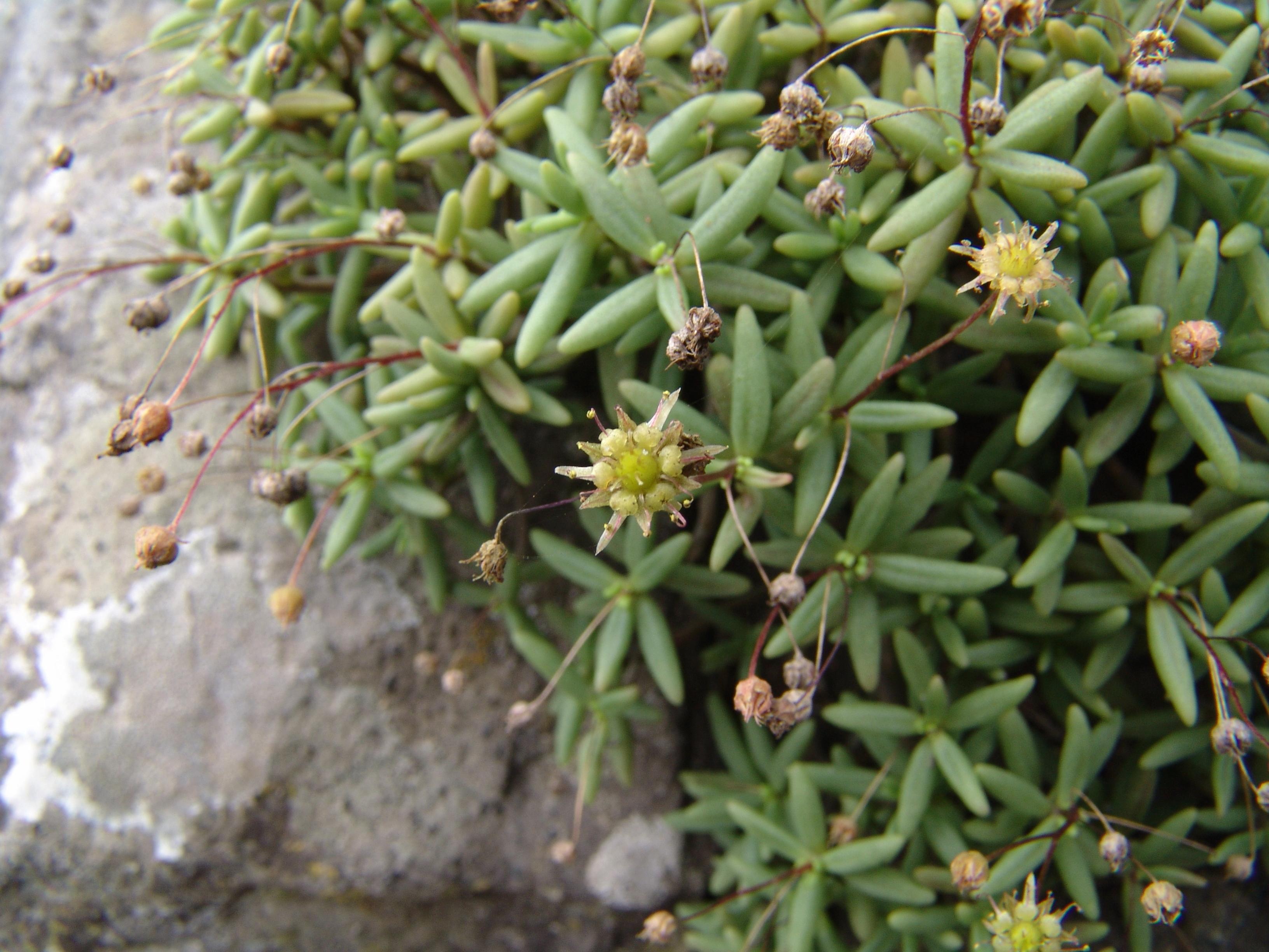 taborno2-054-flores-a-10-1.jpg