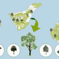 El bosque de las Islas Canarias