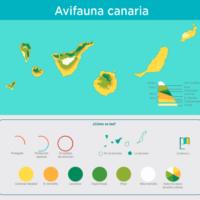 Infografía: Avifauna canaria