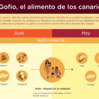 Infografía: Gofio, el alimento de los canarios