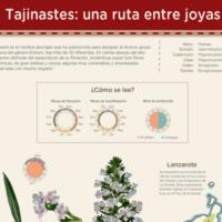 Infografía: Tajinastes: la ruta de las joyas