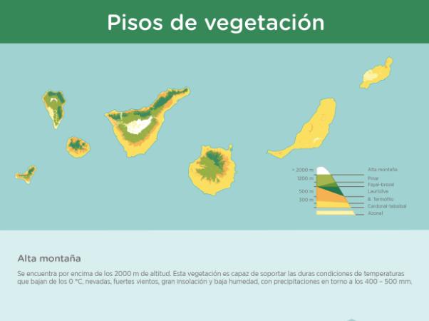 Infograf a pisos de vegetaci n recursos educativos for Pisos de vegetacion canarias