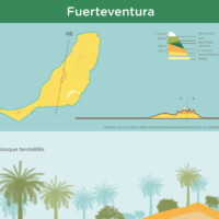 Infografía: Pisos de vegetación de Fuerteventura
