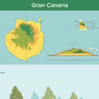 Infografía: Pisos de vegetación de Gran Canaria