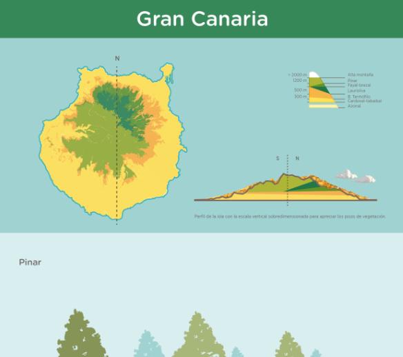 Infograf a pisos de vegetaci n de gran canaria recursos for Pisos de vegetacion canarias