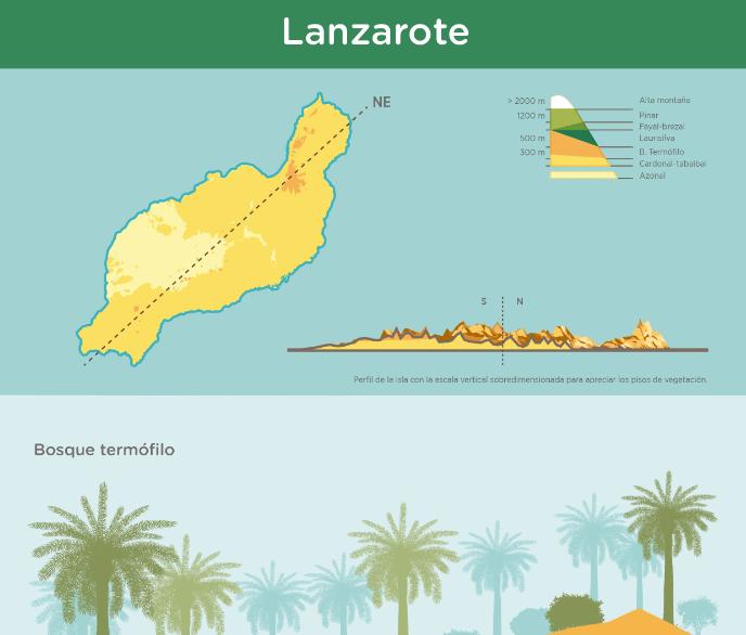 Infograf a pisos de vegetaci n de lanzarote recursos for Pisos de vegetacion canarias
