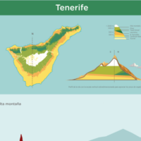 Infografía: Pisos de vegetación de Tenerife
