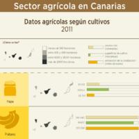 Infografía: Sector agrícola en Canarias
