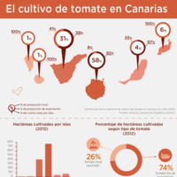 Infografía:  El cultivo de tomate en Canarias