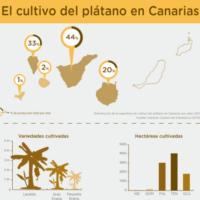 Infografía:  El cultivo del plátano en Canarias