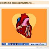 El Sistema cardiocirculatorio