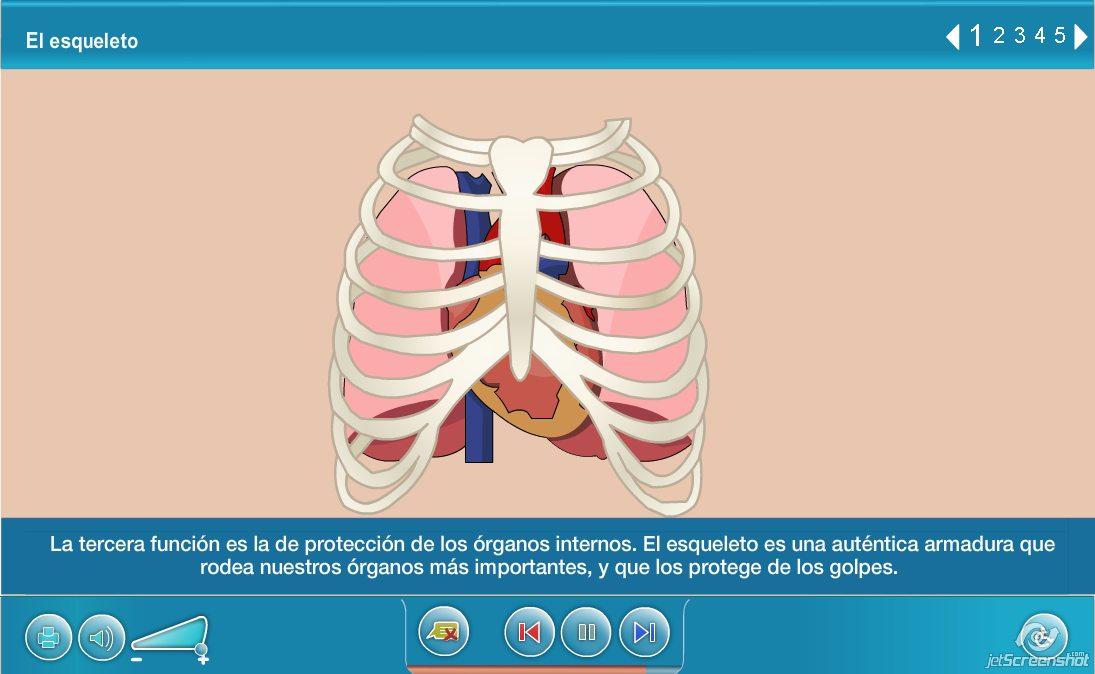 El esqueleto (Agrega) » Recursos educativos digitales