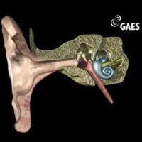 Viaje al interior del oído