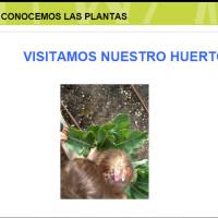 Conocemos las plantas.