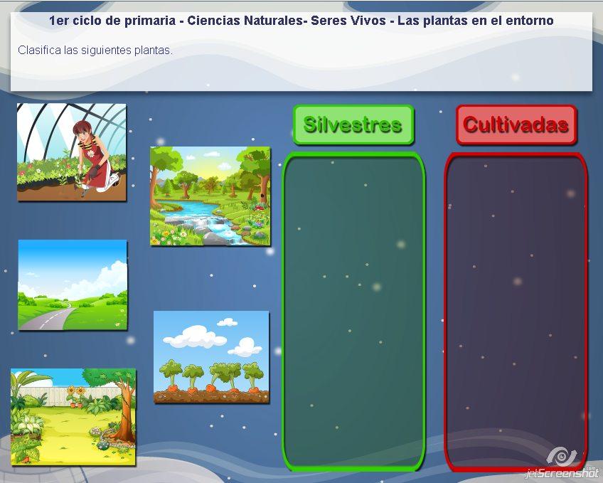 Las plantas en el entorno  Recursos educativos digitales